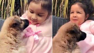 Mahendra Singh Dhoni's Daughter Ziva Playing With a Puppy is The Cutest Thing Ever