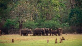Bandipur National Park is Home to Gorgeous Asiatic Elephants That Are a Delight to Watch