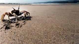 5 Beaches in Maharashtra That Should be on Every Traveller's List