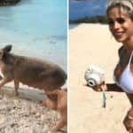 Fitness Model Michelle Lewin Gets Bit by Annoyed Pig on Her Bottom in Bahamas Island, Calls it a 'Love Bite' – Watch Viral Video