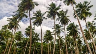Port Blair is a Great Mix of Shimmering Beaches And Other Sightseeing Spots