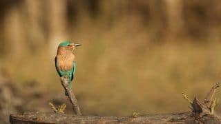 Watch Out For These Birds at Satpura Tiger Reserve in Madhya Pradesh