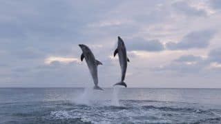 5 Top Places to Spot Dolphin in India