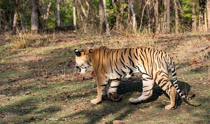 Go on a Heritage Running Trail Amidst Nature at Pench National Park