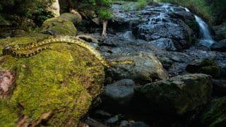 Complete Guide on The Flora And Fauna Inside Silent Valley National Park