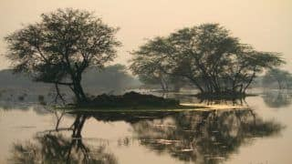 Sultanpur National Park in Haryana is a Birder's Delight