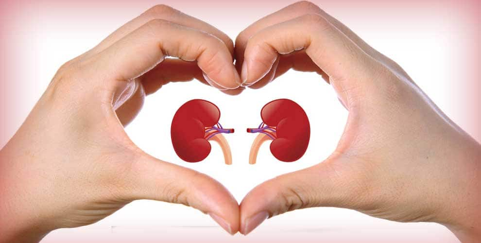 Image result for world kidney day 2019