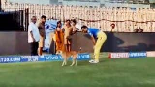 IPL 2019: MS Dhoni Plays Around With Dog Ahead of CSK v KKR Will Melt Your Heart | WATCH VIDEO