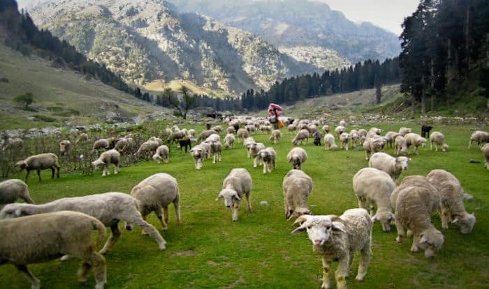 What to See And Do When in Pahalgam