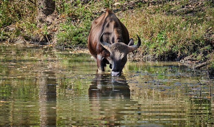Kabini Wildlife Sanctuary: A Tryst With Karnataka's Biodiversity