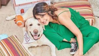 Television Hottie Jennifer Winget Looks Sexy in Green Jumpsuit as She Strikes a Pose With Her Dog Breezer