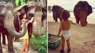 Lisa Haydon And Her Son Zack Feed Bananas to Elephants During Their Holiday at Beach Location, Pics Will Give You Major Travel Goals