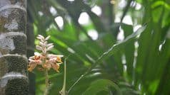 Give The Beaches a Miss, Head to The Top Spice Plantations in Goa