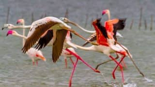 Wildlife Parks in Odisha: Home to a Wealth of Biodiversity