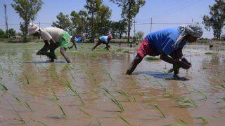 Union Budget 2020: Nirmala Sitharaman's 16-Point Action Plan to Help Farmers