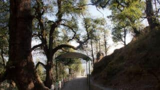 Why You Must Take a Solo Trip to Dhanaulti This June