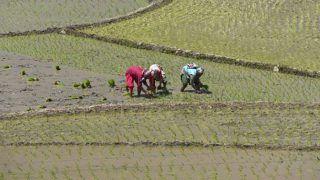 Farmer Suicides: Maharashtra Govt to Transfer Land Titles to Widows
