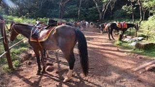 Best Destinations For Horse Riding in India