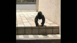 Crow or Gorilla: This Video Has Left The Netizens Divided, You Decide What it is!