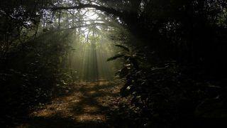 Chintamani Kar Bird Sanctuary: What Makes it a Birder's Paradise