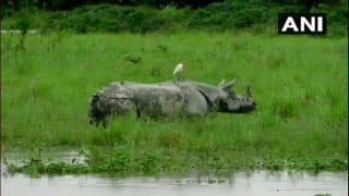 Assam: Flood Submerges 70 Per Cent of Kaziranga National Park