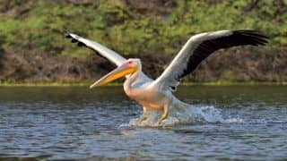 What to See and do When in Bharatpur