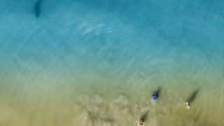 Man Shares Terrifying Pictures of Shark Swimming Towards Its Kids at Florida Beach
