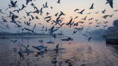 सावधान! साबरमती नदी के पानी में फैला कोरोना वायरस, जांच के लिए भेजे गए सैपल में निकला संक्रमण