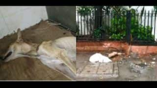 Anushka Sharma, Sonam Kapoor Report Cruelty Against Dog in Mumbai Society, The Bombay Animal Rights Calls For Protest