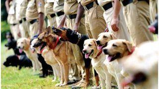मध्य प्रदेश में 'कुत्तों के तबादले' पर घमासान: कांग्रेस बोली- कुत्तों जैसी हुई सोच, BJP नेता बोले- हां हम हैं