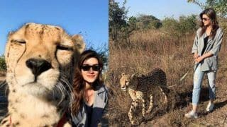 Kriti Sanon Gets Slammed For Sharing Pictures With Cheetah From Her Zambia Holiday