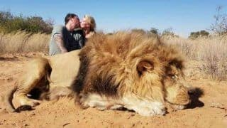 Canadian Couple Kissed And Photographed Themselves After Shooting Lion, Faces Backlash