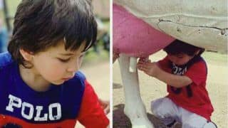 Taimur Ali Khan, Inaaya Naumi Kemmu And Kainaat Singha Take Part in Farm Activities, Milk a Cow- Check Videos