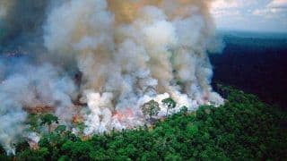Amazon Burning at Record Rate; Here's How You Can Help Slow Deforestation