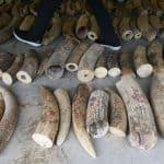 Singapore to Ban Domestic Trade of Elephant Ivory From September 2021