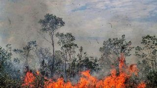 Amazon Rainforest Fire: New Outbreaks Recorded in Brazil - Data Follows