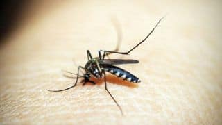 Sri Lanka: 47 People Dead, Over 200,000 Infected With Dengue Virus