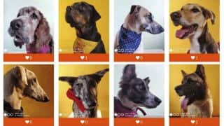 Xiaomi teams up with CUPA for special pet adoption drive; captures dog portraits with Mi A3