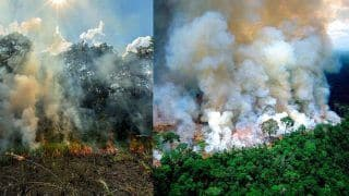 What is The Reason Behind Amazon Rainforest Fire? Read on