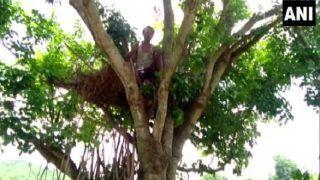 Odisha Villagers Live Atop Trees After Wild Elephants Damage Houses