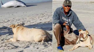 Blind Pit Bull Dog Tries to Help Dead Dolphin Washed up on a Beach in The US