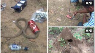 बियर की कैन में फंसा कोबरा का मुंह, लोगों ने रेस्क्यू कर कुछ इस तरह बचाई जान