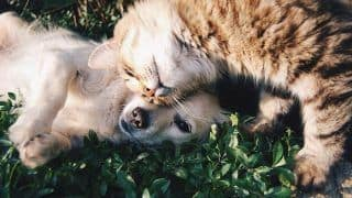 Natural Remedies For Flea And Tick