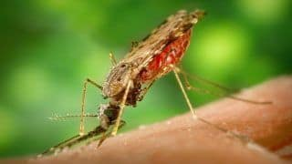 Malaria Cases And Deaths Drop Down in India Significantly