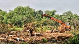 2,141 Trees Felled: Construction Will Happen, Respect SC Order, Says MMRC