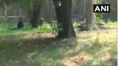 VIDEO: दिल्ली के चिड़ियाघर में शेर के बाड़े में घुसा शख्स, सामने बैठकर करने लगा कुछ ऐसा
