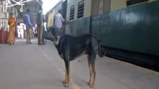 Watch| How This Abandoned Dog Is Helping Railway Police in Chennai
