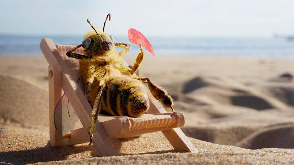 Creating a Buzz! How World's First Bee Influencer Is Using Instagram to  Save Her Species