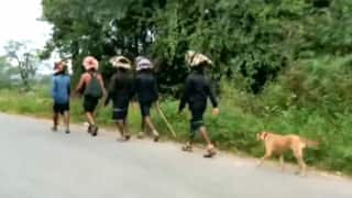 Watch | Stray Dog Follows 13 Devotees to Sabarimala, Walks 480 Kms and Counting