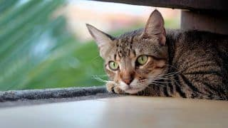 Yet Another Animal Cruelty Case as Pregnant Cat Hanged to Death in Kerala